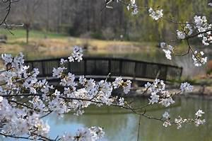 The National Cherry Blossom Festival U00ae Extends Into Fairfax