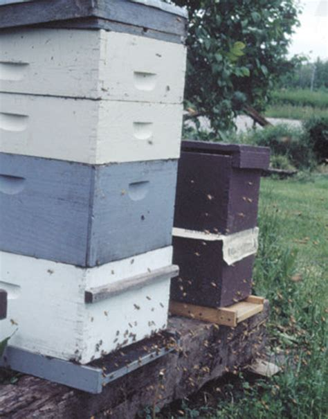 Backyard Honey Bee Hive by Beekeeping 101 Diy Beekeeping Supplies Plans And Ideas