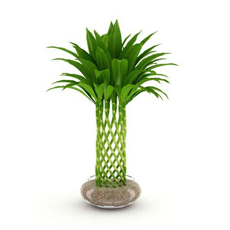 bamboo plants bamboo plant 3d model max obj fbx c4d cgtrader com