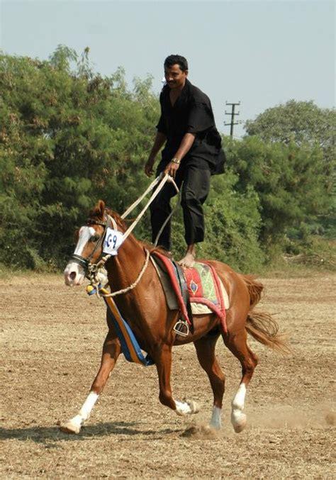 Kathiawari Horse Info, Origin, History, Pictures Horse