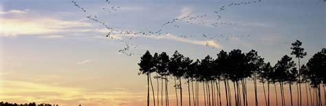 gites ou chambres d hotes le parc naturel régional et la forêt des landes pnr