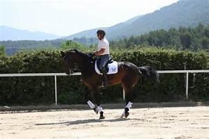 Ecurie Marseille : dressage de chevaux ecurie des c dres ecurie de propri taires 10 mn de marseille ~ Gottalentnigeria.com Avis de Voitures