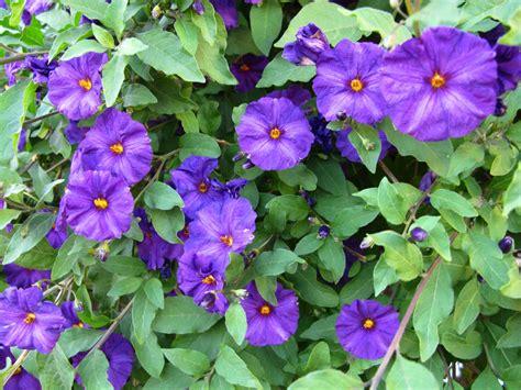flower vines vine flowers cheap liehaudifqdoh blog hr