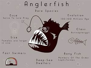 Ode To The Anglerfish, The Deep's Most Underappreciated ...