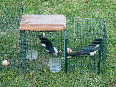 piege a pigeon fait maison piege a pigeon fait maison 28 images pi 232 ge cage 224 rat cage pi 232 ge 224 tr 233