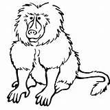 Baboon Coloring Printable Getcolorings sketch template