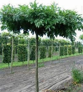 Arbre à Croissance Rapide Pour Ombre : assortiment arbres d coratifs inter arbo ~ Premium-room.com Idées de Décoration