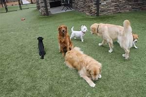 laurel oak farm dog kennel charlotte nc With dog daycare charlotte nc