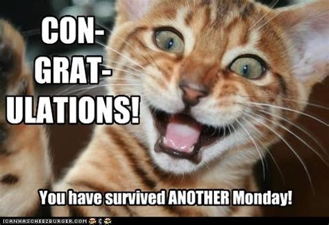 survived  monday lolcats lol cat memes