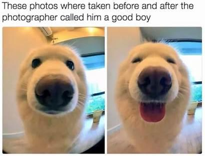 Memes Dog Funniest Quarantine Rona Boy She