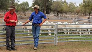 Attention on Aussie Whites   Queensland Country Life