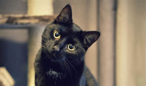 Black Cats Are Struggling To Find New Homes, But Hopes Are