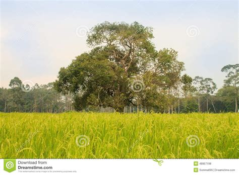 meadow green color green meadow and a big tree stock photo image 48957198