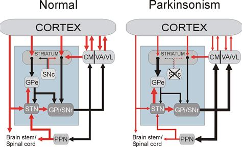 basal ganglia circuit search motor system