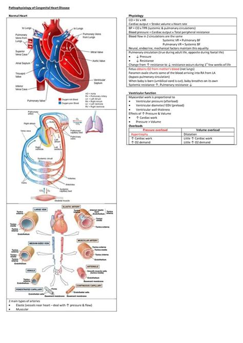 Systemic Vascular Resistance  Pathophysiology Of. Drunk Driving In Hawaii Del Rio Family Dental. Hotels By Frankfurt Airport American Us Air. Llc Filing Fee California Car Ignition Repair. Dymo Labelwriter 450 Label Printer. Toshiba Steam Turbine Generator. Recover Exchange Mailbox Ovh Dedicated Server. Business Credit Cards Without Personal Guarantee List. Enterprise Networking Solutions