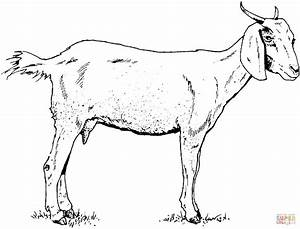 Domestic Animals:Printable Goat Coloring Pages { 34 Pictures }