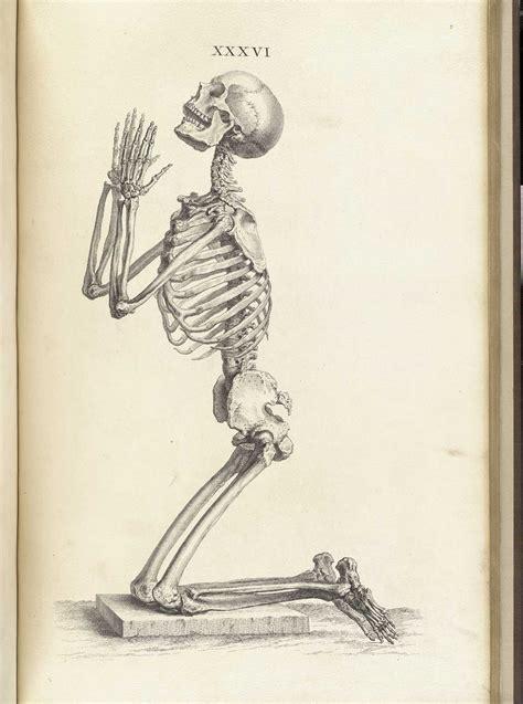 historical anatomies   web william cheselden home