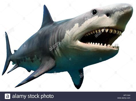 Megalodon Images Megalodon Shark Stock Photos Megalodon Shark Stock