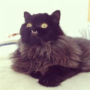 Image result for images of monster cat