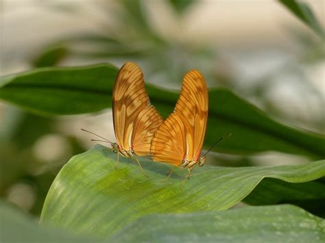 free butterfly photos free stock photos download 670 free