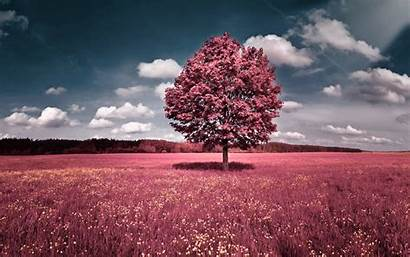 Trees Pink Wallpapers Nature Flowers Cave