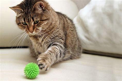 katzen die sehr verspielt sind