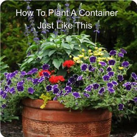 how to make a beautiful mixed container of flowers