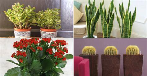 common indoor cacti  succulents world