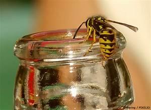 Pflanzen Gegen Wespen : was hilft gegen wespen tipps zum wespen vertreiben garten hausxxl garten hausxxl ~ Frokenaadalensverden.com Haus und Dekorationen