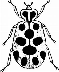 Lady Bug Clip Art Black And White - ClipArt Best