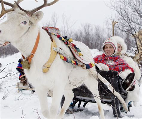 a winter sleigh ride with a white reindeer come join me