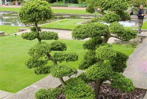 planter un buis en pot planter un buis dans un 28 images jardin zen moderne comment am 233 nager un jardin