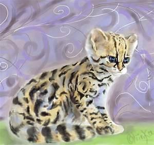 Ocelot House Cat | www.imgkid.com - The Image Kid Has It!