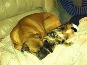 Seven Kitties Sleeping » Adopt-a-Pet.com Blog