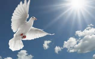White Image of the Holy Spirit as Dove