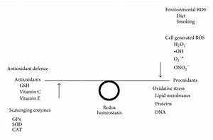 Oxidative Stress Mechanisms  Gsh  Glutathione  And Vitamin