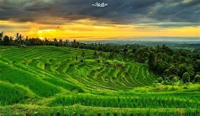 Pemandangan Sawah Gambar Yang Desa Dan Alam