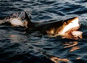 Sharks Surprise Tourists in Shallow Waters At Florida ...
