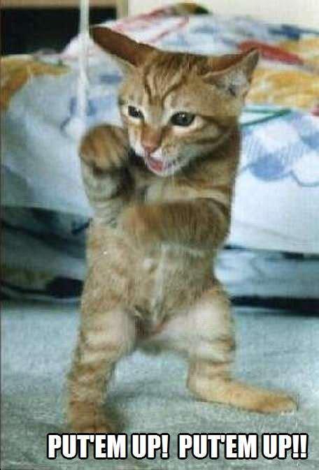put em  put em  kittyworks