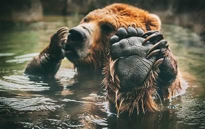 Wildlife Wallpapers Wild Desktop Bear Backgrounds Lake