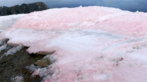 pretty  pink arctic cotton candy colored snow