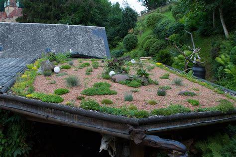 dachbegruenung  pflanzen fuer jedes gruendach garten