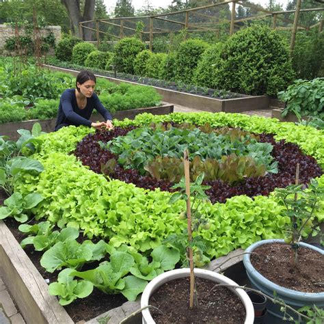 organic kitchen gardening 10 components of the best organic kitchen garden poshveggies 1228