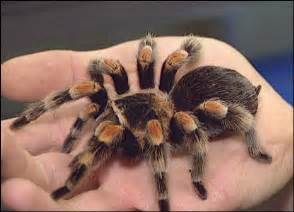 Dogs That Shed The Least by Large And Possibly Hairy Spiders In Your House Squish Or