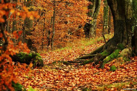 technique de cuisine forêt en automne images photos