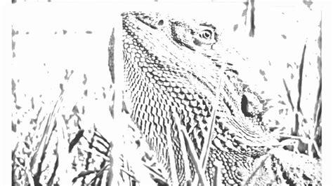 auto draw  lizard youtube