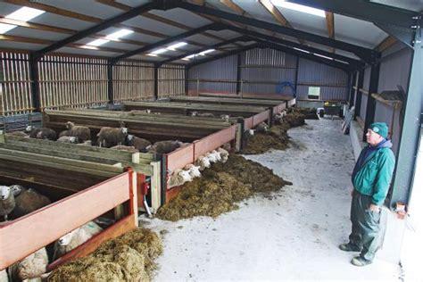 shed for sheep time saving sheep shed 04 december 2013 premium