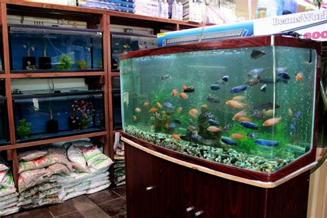local fish and aquarium stores in ca fishstoresnearme