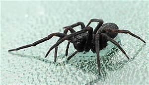 Mittel Gegen Spinnen Im Haus : was hilft gegen spinnen wissen ~ Michelbontemps.com Haus und Dekorationen