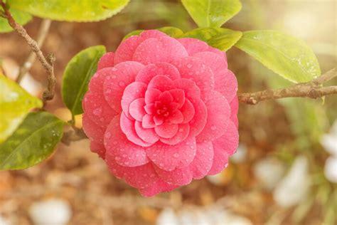 un chinois cuisine élia signification des fleurs
